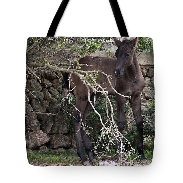 sweet heart - A tender foal wait his beloved mother  Tote Bag by Pedro Cardona