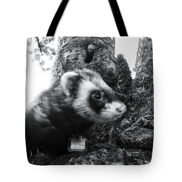 Sweet Little Nicky Chillin In A Tree Tote Bag