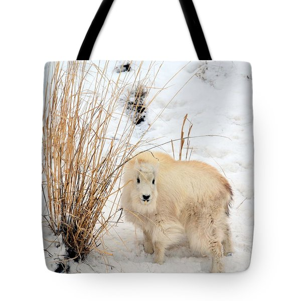 Tote Bag featuring the photograph Sweet Little One by Dorrene BrownButterfield