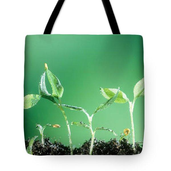 Sweet Pepper Tote Bag
