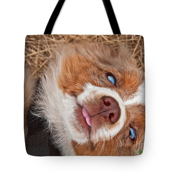 Tote Bag featuring the photograph Sweet Australian Shepherd Puppy Face Art Prints by Valerie Garner