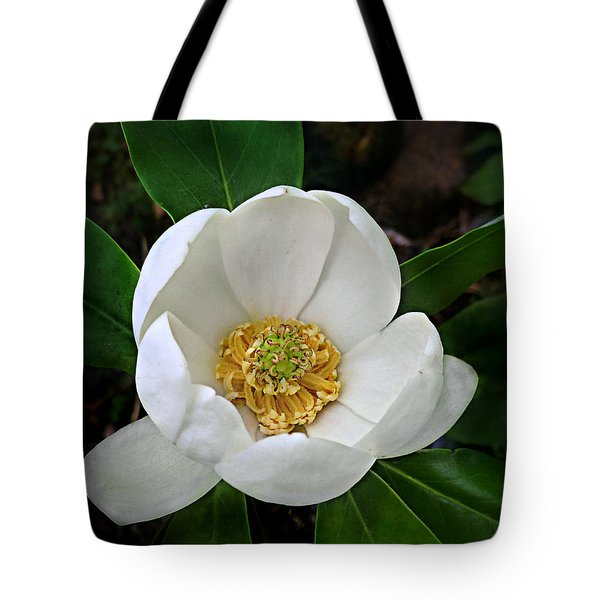 Tote Bag featuring the photograph Sweetbay Magnolia by William Tanneberger