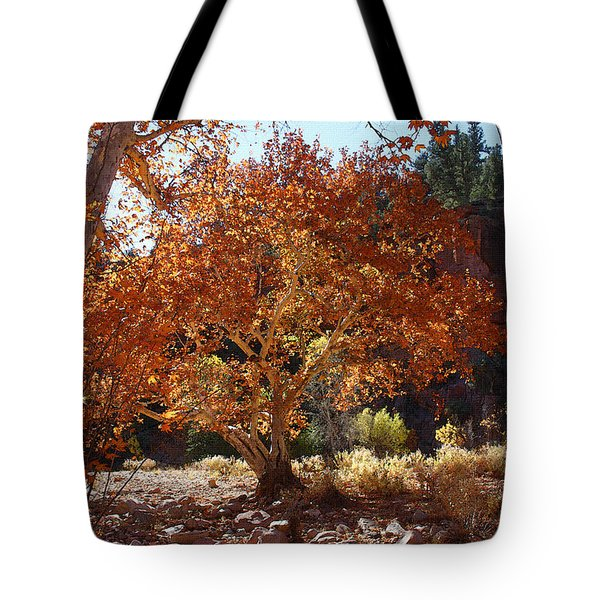 Sycamore Trees Fall Colors Tote Bag by Tom Janca