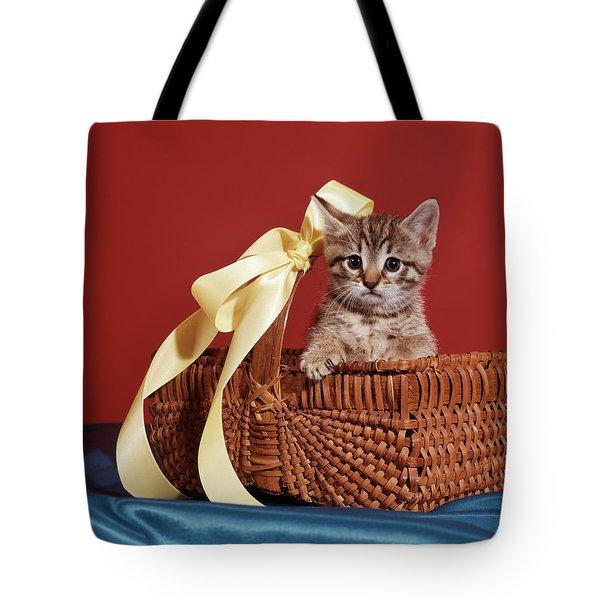 Tabby Cat Kitten Looking At Camera Tote Bag