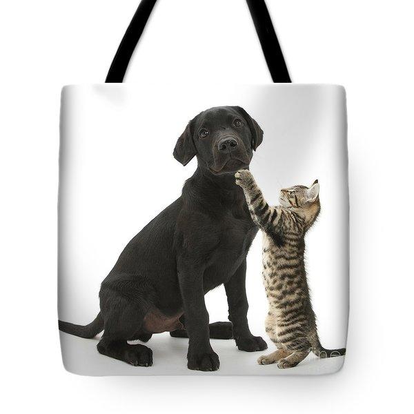 Tabby Male Kitten & Black Labrador Tote Bag by Mark Taylor