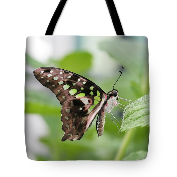 Tailed Jay Butterfly #3 Tote Bag