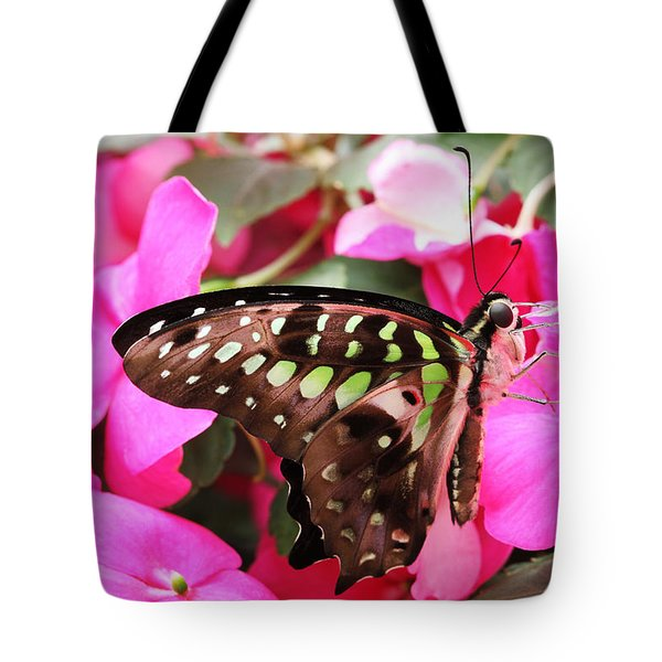Tailed Jay Butterfly #4 Tote Bag