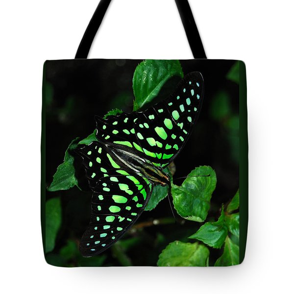 Tailed Jay Butterfly Tote Bag by Eva Kaufman