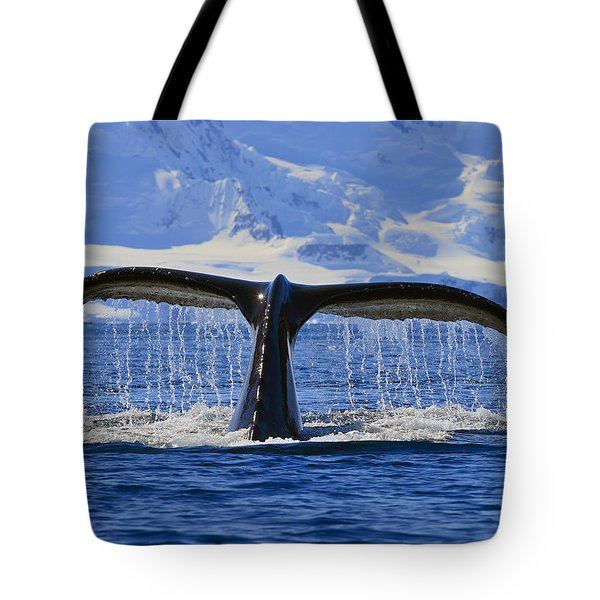 Tails From Antarctica Tote Bag