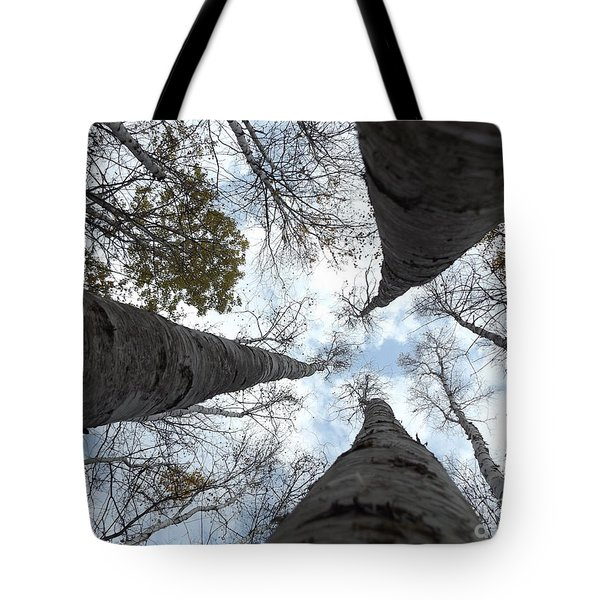 Tall Birches Tote Bag