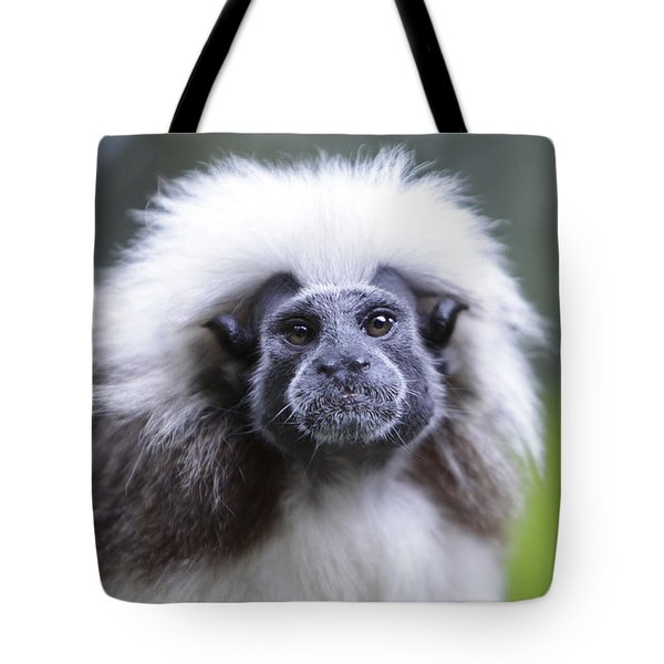 Tote Bag featuring the photograph Tamarins Face by Shoal Hollingsworth