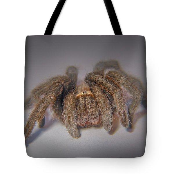 Tarantula Tote Bag by David and Carol Kelly