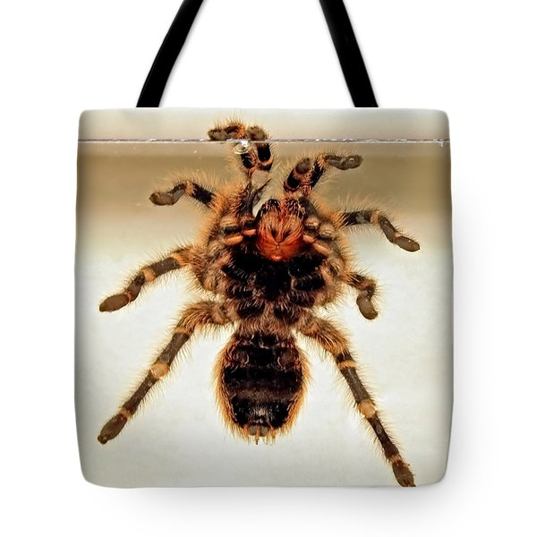 Tote Bag featuring the photograph Tarantula Hanging On Glass by Susan Wiedmann