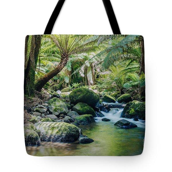 Tasmanian Rainforest Tote Bag by Matteo Colombo