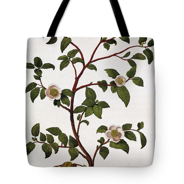 Tea Branch Of Camellia Sinensis Tote Bag by Anonymous
