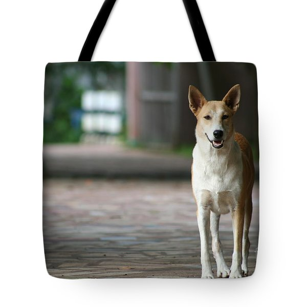 Tote Bag featuring the photograph Temple Dog by Nola Lee Kelsey