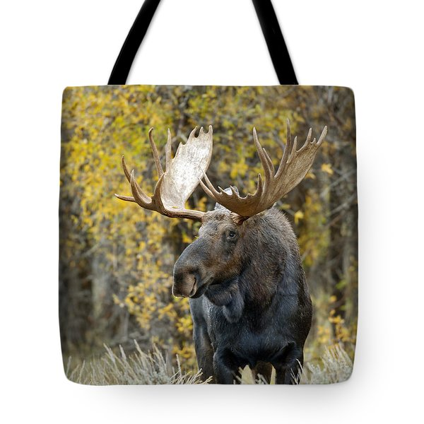 Teton Bull Moose Tote Bag by Gary Langley