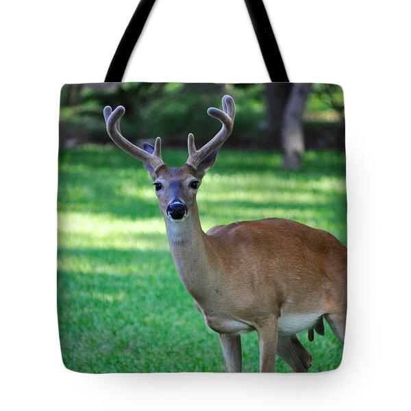 Texas Deer Tote Bag