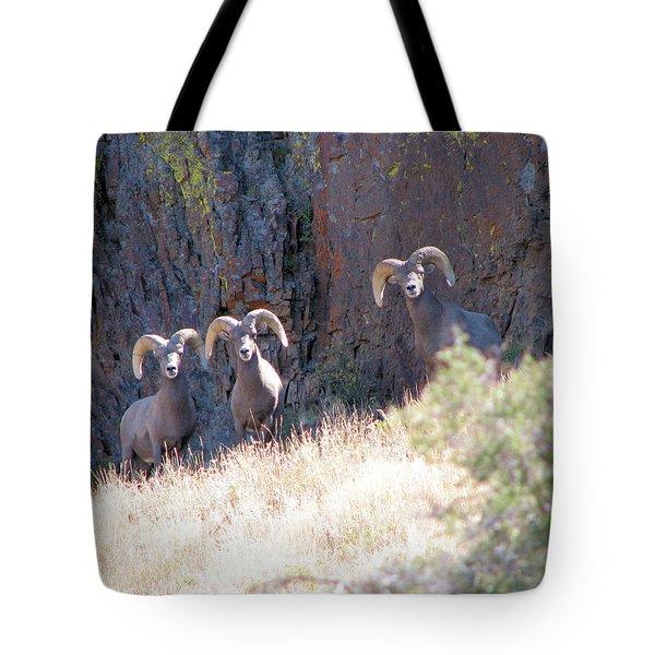 The 3 Amigos Tote Bag