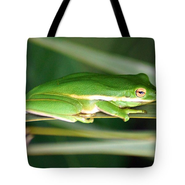 The American Green Tree Frog Tote Bag by Kim Pate