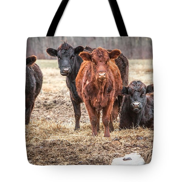 The Angry Cows Tote Bag by Gary Heller