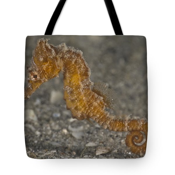 The Baby Seahorse Tote Bag