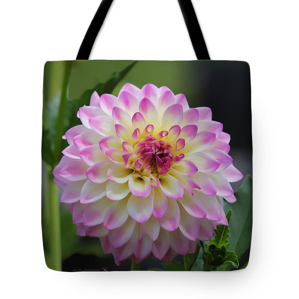 The Beautiful Dahlia Tote Bag