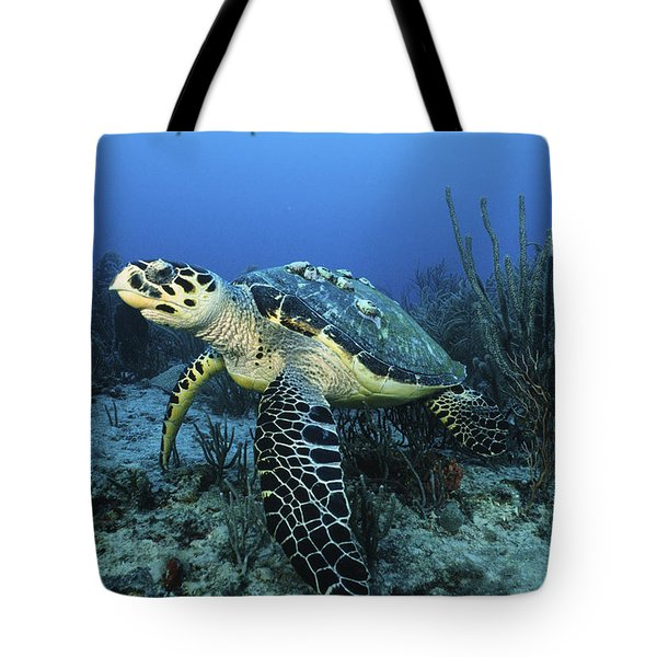 The Beauty Hawksbill Tote Bag