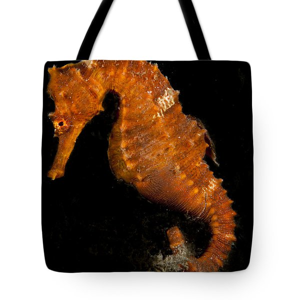 The Bright Orange Seahorse Tote Bag