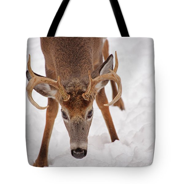The Buck Stare Tote Bag by Karol Livote