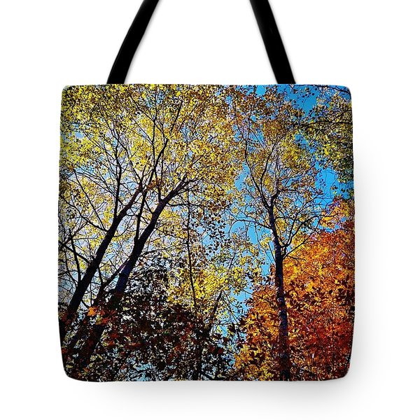 Tote Bag featuring the photograph The Canopy by Daniel Thompson