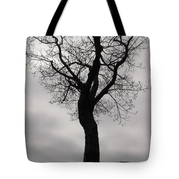 The Chill Of Spring In The Shenandoah Tote Bag