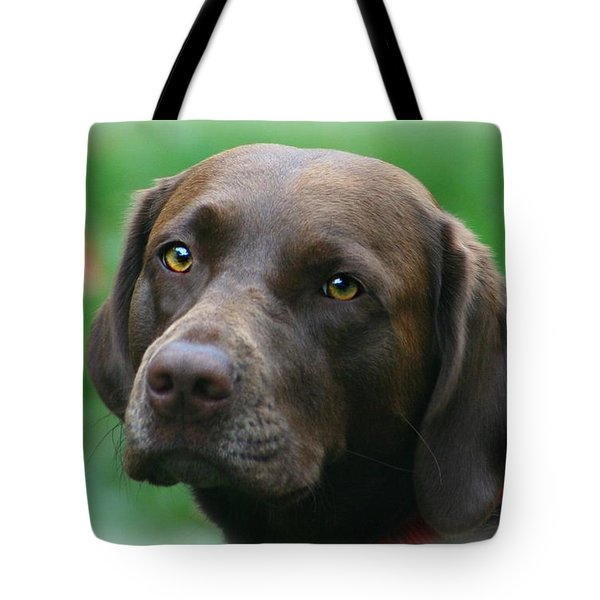 The Chocolate Lab Tote Bag