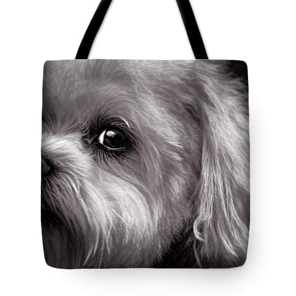 Tote Bag featuring the photograph The Dog Next Door by Bob Orsillo