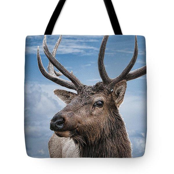 The Eye Of The Elk Digital Art By Phyllis Taylor