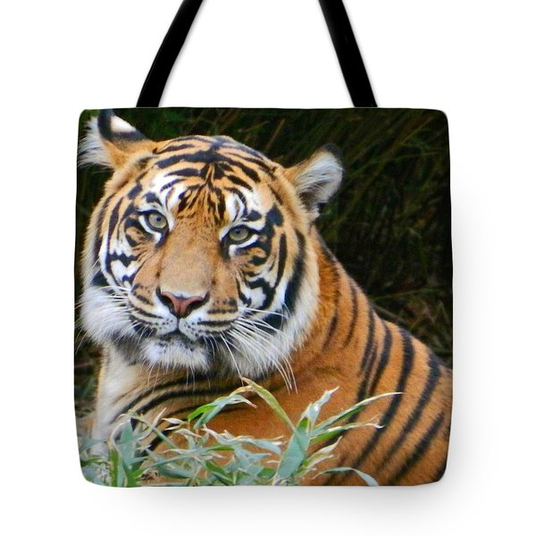 The Eyes Of A Sumatran Tiger Tote Bag