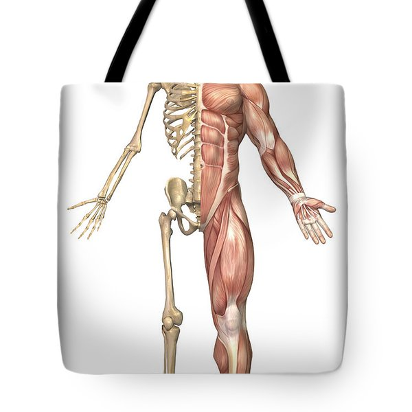 The Human Skeleton And Muscular System Tote Bag by Stocktrek Images
