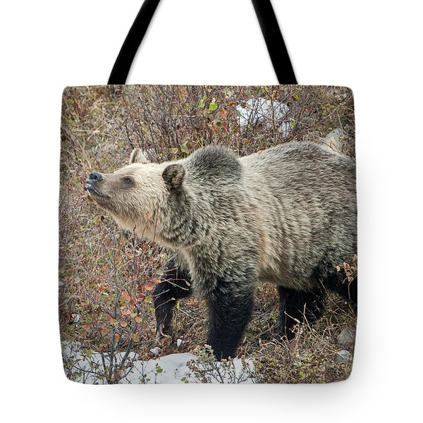 Tote Bag featuring the photograph The Last Berry by Jack Bell