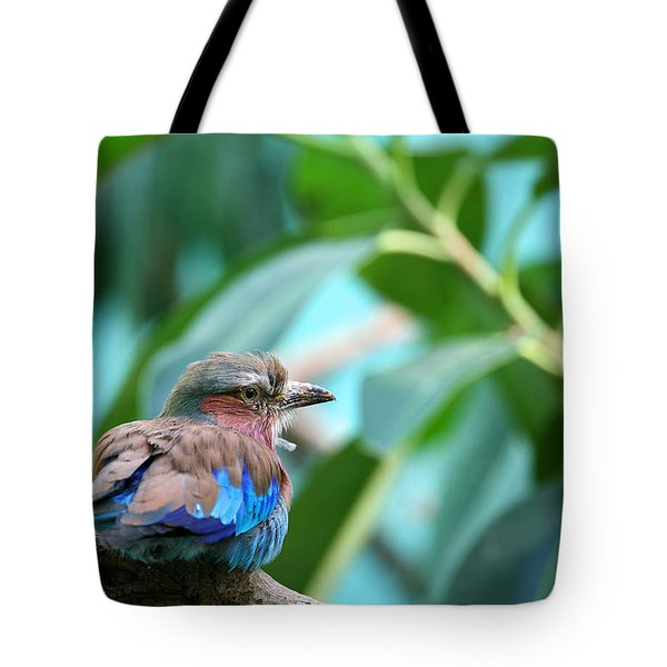 The Lilac Breasted Roller Tote Bag by Karol Livote