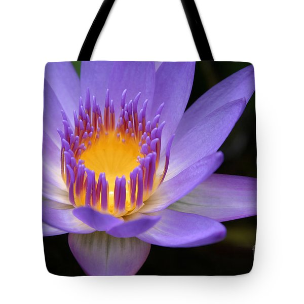 The Lotus Flower - Tropical Flowers Of Hawaii - Nymphaea Stellata Tote Bag by Sharon Mau