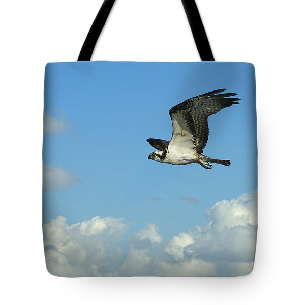 The Osprey 2 Tote Bag by Ernie Echols