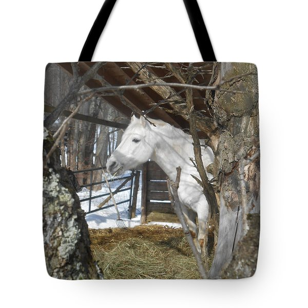 The Paso Fino Stallion At Home Tote Bag by Patricia Keller