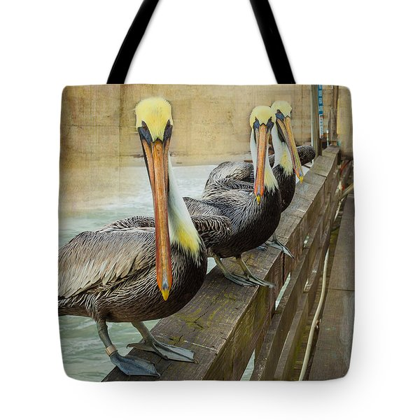 The Pelican Gang Tote Bag by Steven Reed