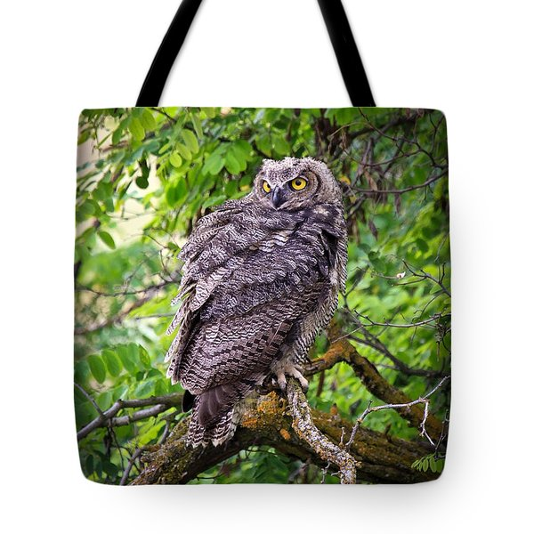 The Perch Tote Bag by Steve McKinzie