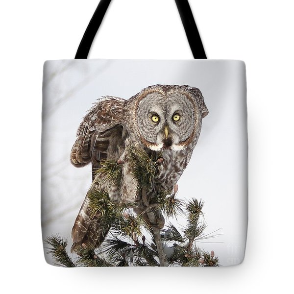 The Perching Prince Tote Bag by Heather King