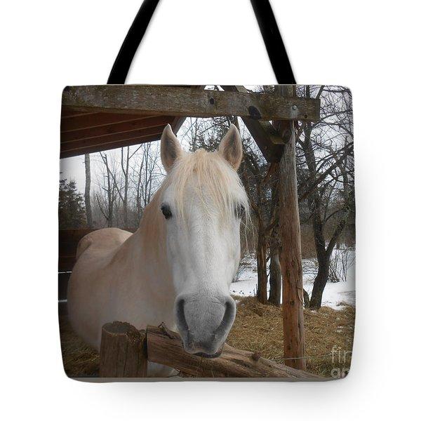 The Picture Perfect Paso Fino Stallion Tote Bag