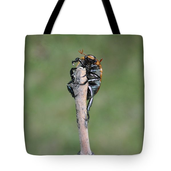 Tote Bag featuring the photograph The Posing Beetle by Verana Stark