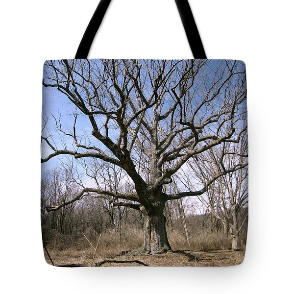 Tote Bag featuring the photograph The Sacred Oak 4 by Melissa Stoudt