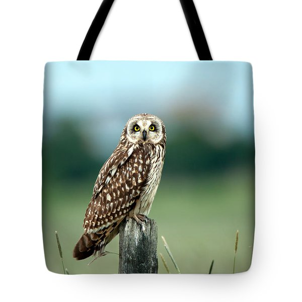 The Short-eared Owl  Tote Bag