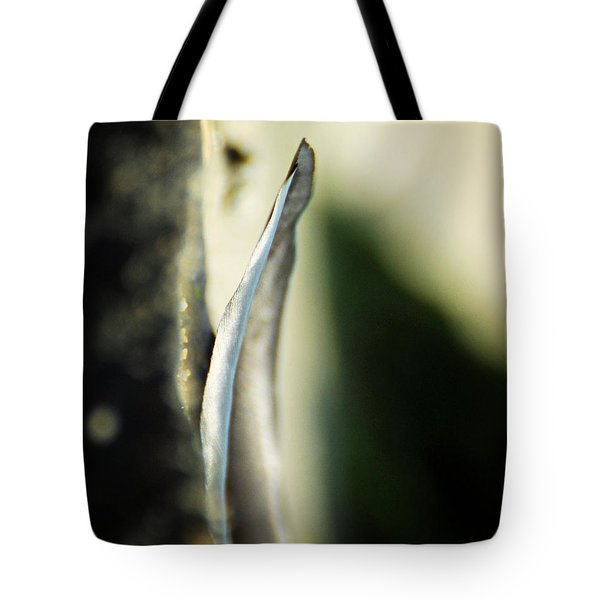 The Unchanging Tote Bag